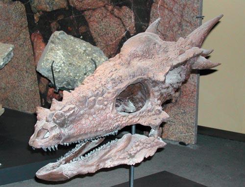 Stygimoloch Spinifer skull