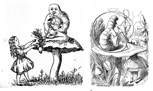 Alice and Caterpillar